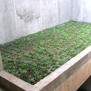 GREENROOF_INDONESIA