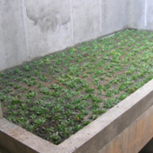 Indonesia Green Roof
